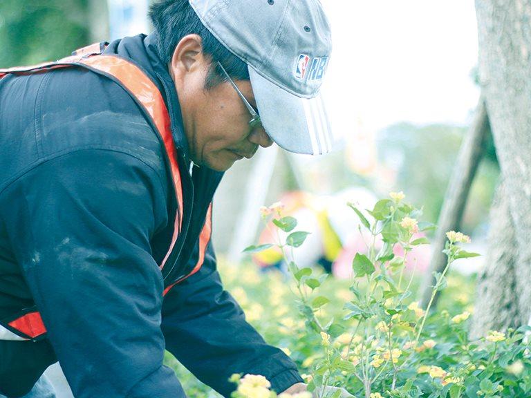 種下安全島上整齊的綠 / 周炳樺