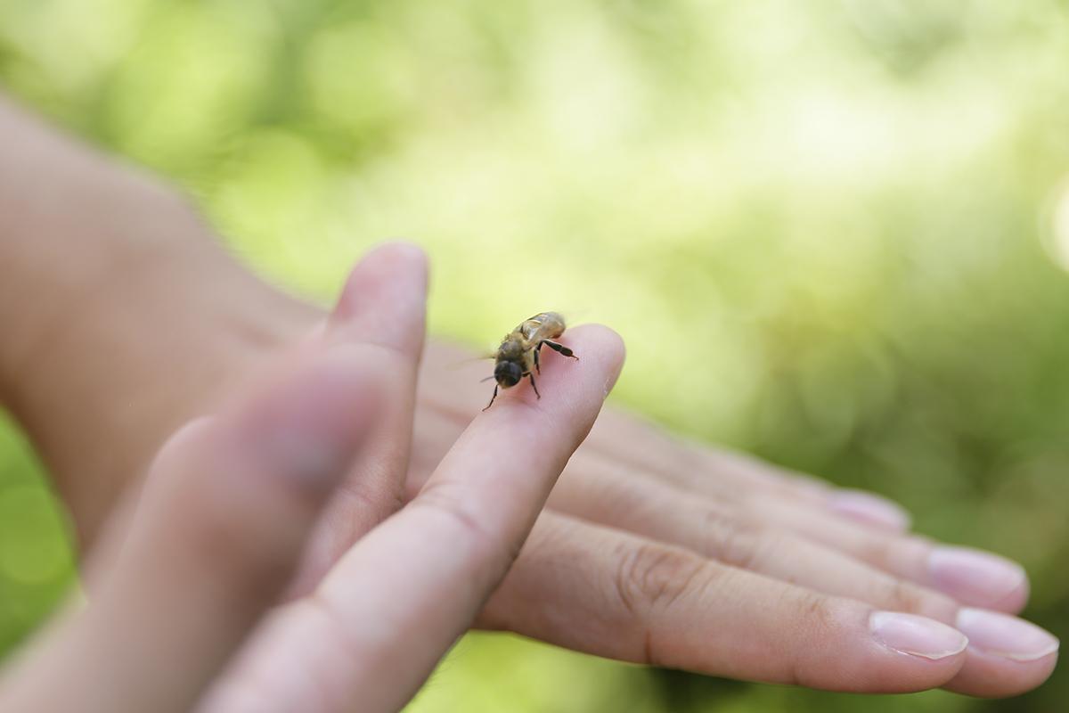 一開始養蜂的時候,充斥著許多挫折, 才知道爺爺和父親養蜂的日子,需要花費多少心力。或許是因為長期任職工程師的工作,在快速變化的工作狀態下,這也讓陳大哥重新檢視自己,學習放慢腳步,傾聽大自然的聲音,學著與大自然共處,也學著與蜜蜂一起工作生活,現在蜜蜂已經和他成為最好的夥伴呢! | 甘樂文創 | 甘之如飴,樂在其中