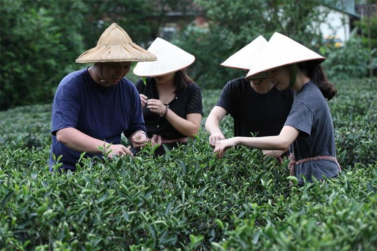 碧螺春製茶課程 三峽是台灣唯一出產「碧螺春」的茶產地,其因氣候環境適合茶樹「青心柑仔」生長,在海拔200公尺丘陵有機茶園的礫質與砂質壤土上,凝聚了春日的嫩翠芬芳和時雨的甘甜清香,趁著一年中炒製上等綠茶的最佳時機,匯集手摘的條索型茶葉,成就清甜、充滿生命力且回甘的三峽碧螺春。   甘樂文創   甘之如飴,樂在其中