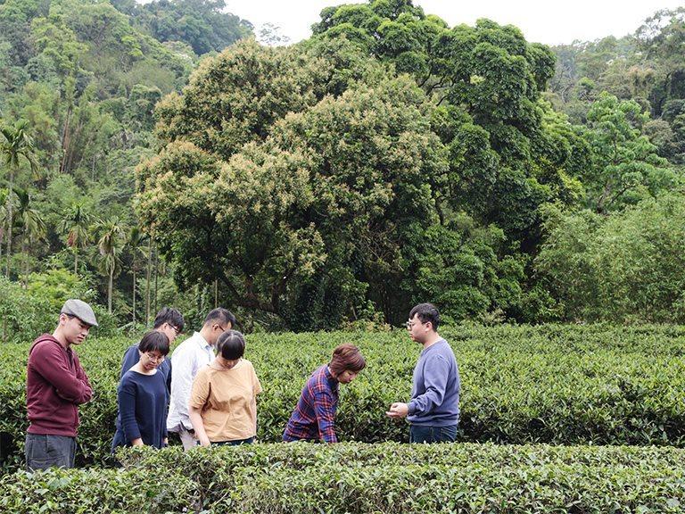 Tea Making Experience DIY Activities - Taipei Top1 one-day tour in Sanxia