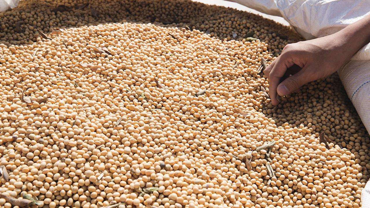 建議消費者在豆漿的選擇上要記得選購「非基改標示」的食物,根據《食品衛生管理法》規定,若產品有95%是非基改黃豆,可於瓶身或產品盒上標示,選擇有標示的豆漿,可避免喝到基改豆漿,對消費者健康較有保障。 | 改變生命的豆漿店