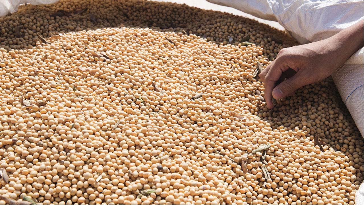 與基改黃豆相比,由在地小農友善耕作的非基改黃豆更需要耗時費工的細心照料,在小農的堅持上,儘管生產成本提高,卻能提供給國人守護環境與健康的100%國產非基改、無農藥的友善大豆,這樣優質的黃豆需要國人給予支持。 | 改變生命的豆漿店