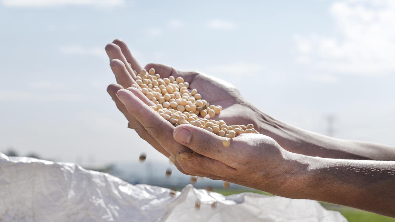 自製豆漿雖然健康,也有製作上的注意事項喔!大豆含有皂素、皂、蛋白酶抑制劑等成分,而皂苷味道帶點苦和辣的味道,要改善這個問題就需要在煮漿過程中充分加熱,溫度大約要到達100度以上,另外也有人會購買豆漿機,那就可以不用擔心溫度的問題囉 | 改變生命的豆漿店
