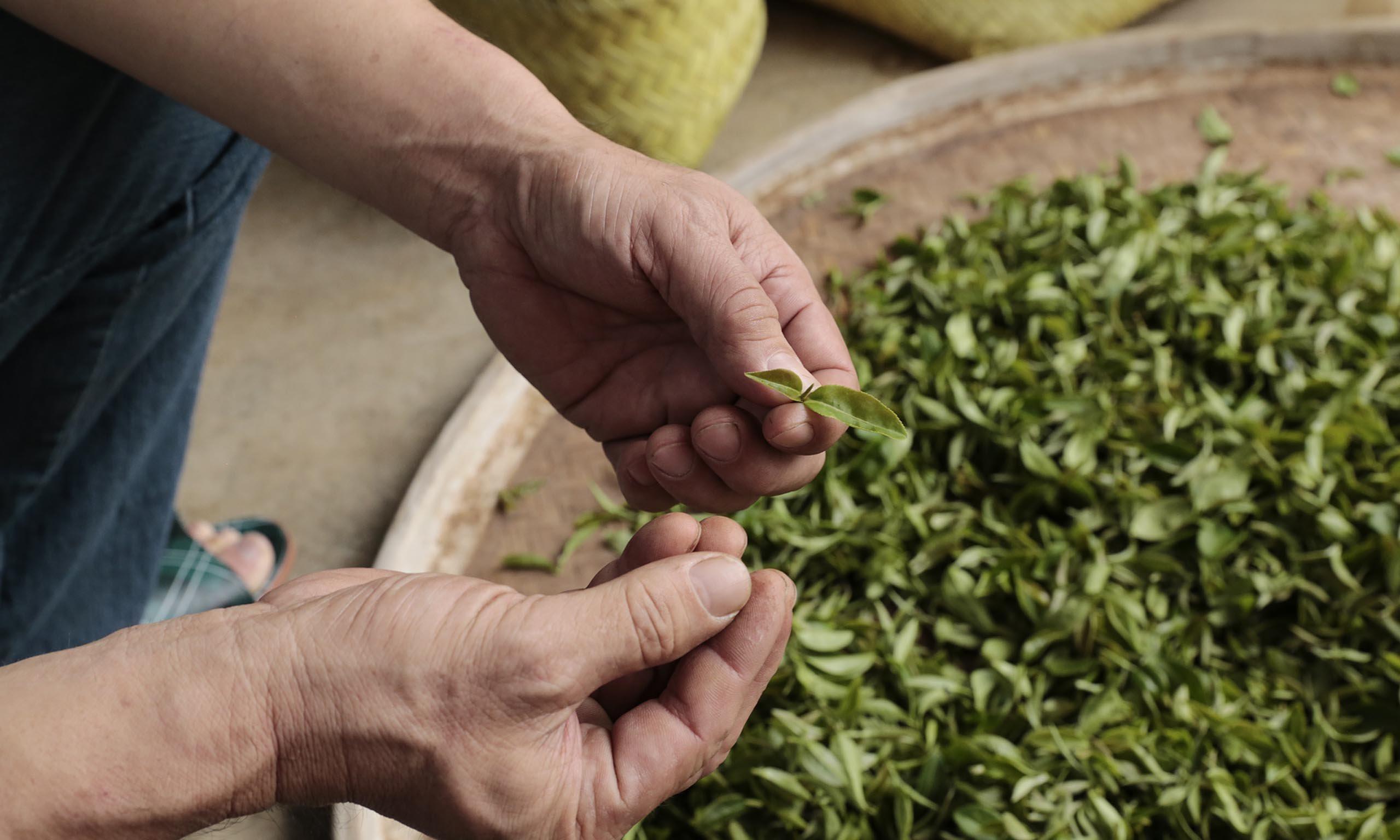 製茶體驗DIY