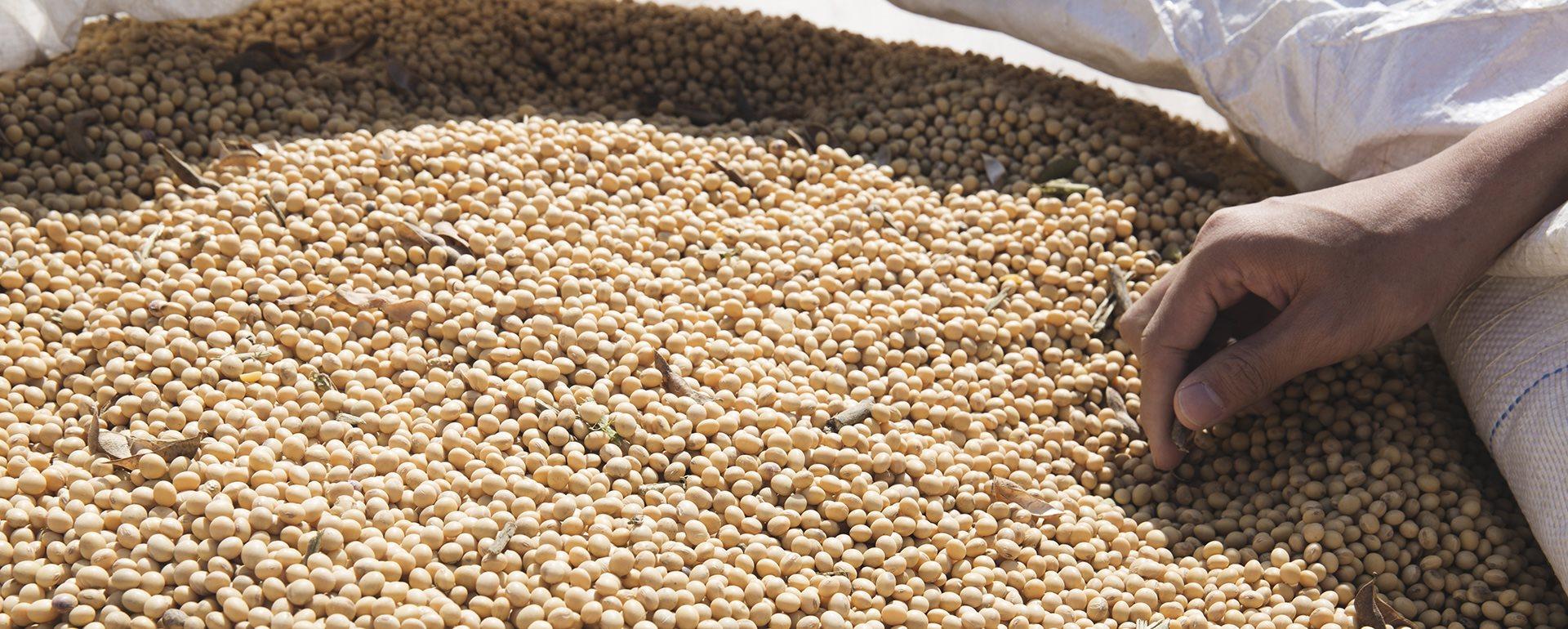 豆渣是什麼?磨豆漿後的豆渣營養價值高,千萬別丟掉!