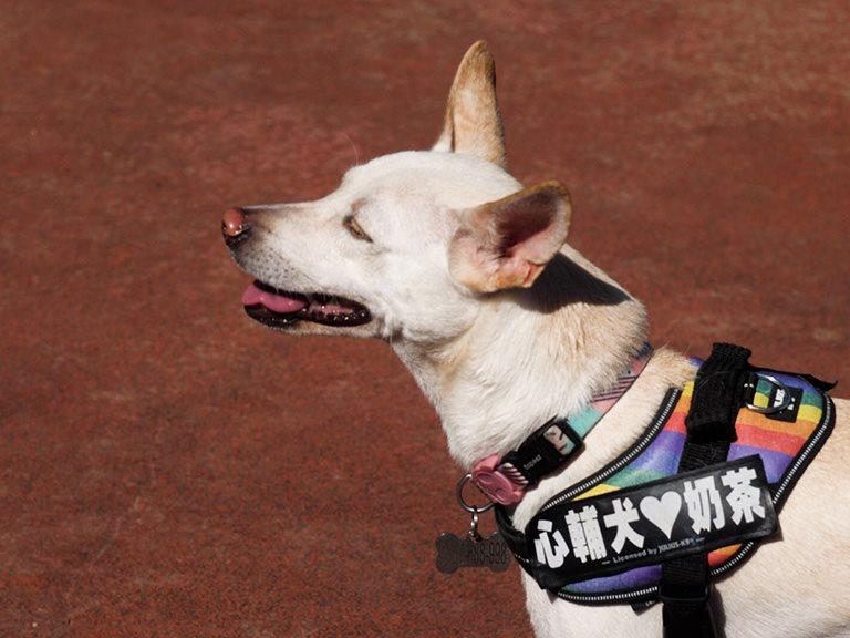 【新北】療育人心的工作犬,在人犬的互動中學習成長的旅程 | 心輔犬心流幸福研究室